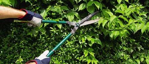 jardineros en acción