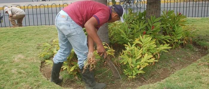 limpieza y jardines