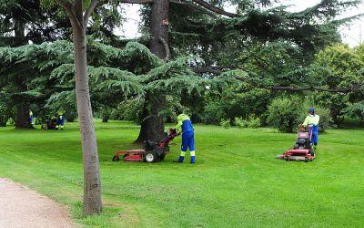 limpieza de jardines en Madrid